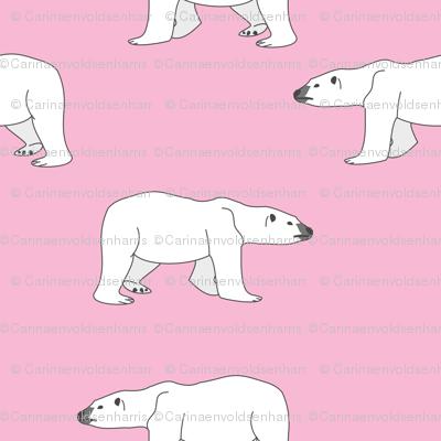 Polar Bears on Pink