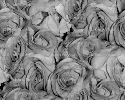 David's Bouquet