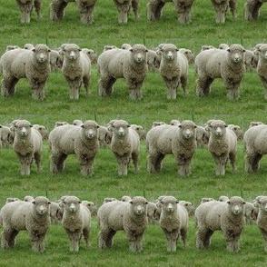 Two-Sheep