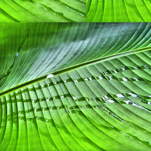 Dripping Green
