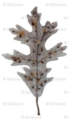 Silver Oak Leaf