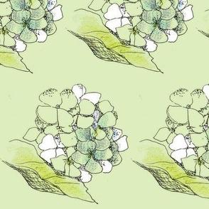 Hydrangea in Celery Green