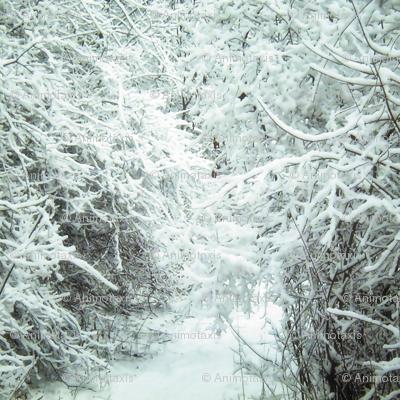 Winter Path, L