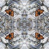 Rrrgrand_cyn_butterfly_shop_thumb