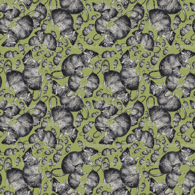 Rats on green background