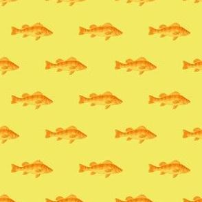 Fishies (morning)