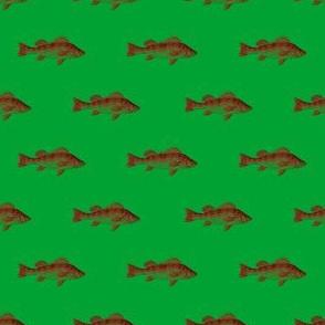 Fishies (surgeon)