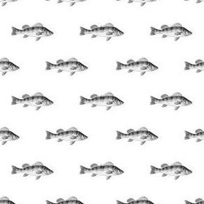 Fishies (B&W)