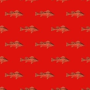 Fishies (bloody)