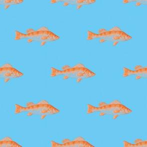 Fishies (Cyprinus)