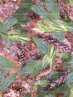 Scattered Pine_B