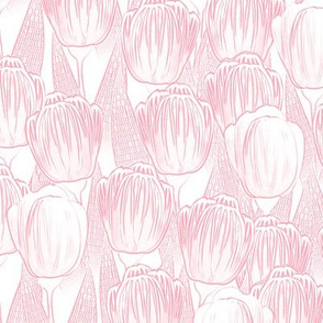 pink kiss tulips