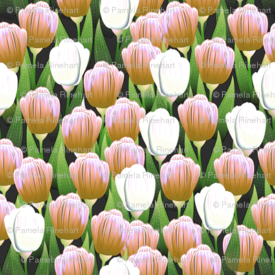 Tulips Pink and White