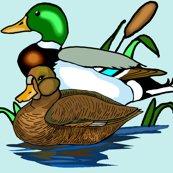 Rrrmallard_ducks_shop_thumb