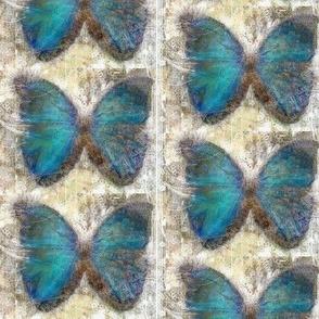 Mountain Blue Butterfly