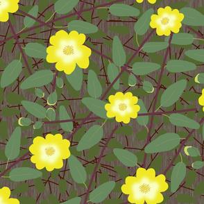 Buttercups on a bush - Hypericum Hidcote