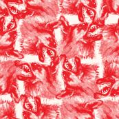 orange wolfes on white background