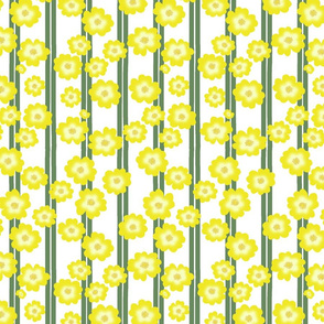 Hypericum Hidcote double stripe with flowers - white (Coordinate for Buttercups on a bush)