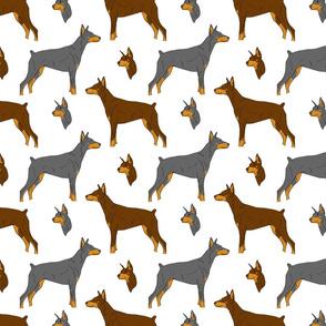 Dobermans - white