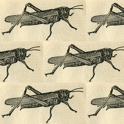 A Plague of Giant Locust on checked background fabric by edsel2084 on Spoonflower - custom fabric