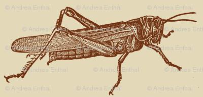 A Plague Of Big Brown Locusts