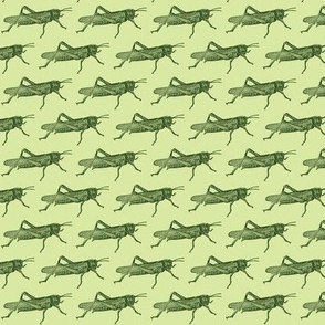 A Plague Of Little Green Locusts