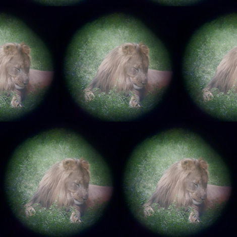 Spotting a Lion fabric by pond_ripple on Spoonflower - custom fabric