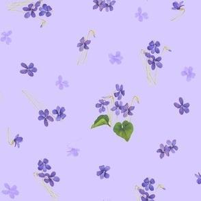 Violets (Medium)