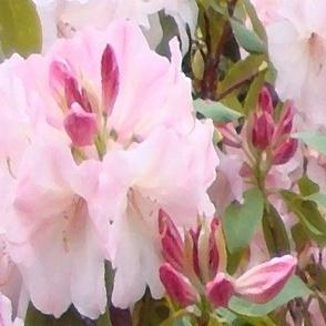 FLOWERS AT DANDENONG 2009-001b