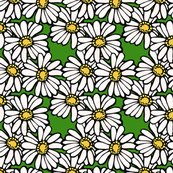 Rrplaindaisies_shop_thumb
