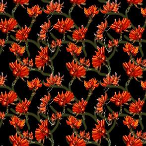 Sydney Flowers 2