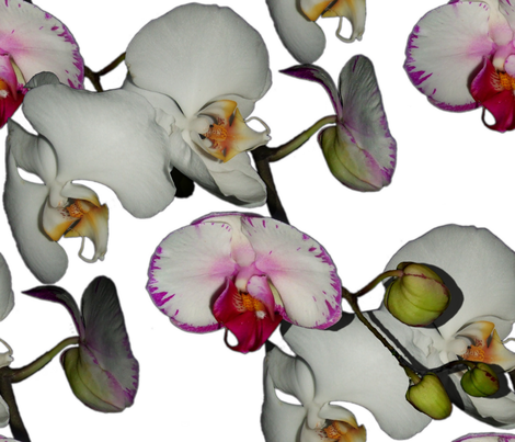 Orchid Ewe Knot White fabric by peacoquettedesigns on Spoonflower - custom fabric