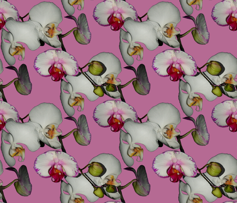 Orchid Ewe Knot fabric by peacoquettedesigns on Spoonflower - custom fabric