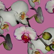 Rrrorchid_orchid.png-1_shop_thumb