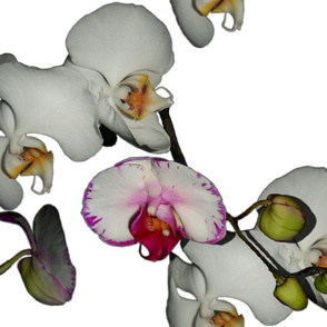 Orchid Ewe Knot ~ Medium