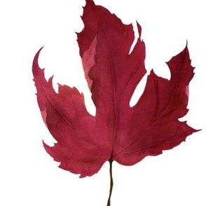 red Maple leaf watercolor