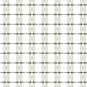 wowiedesigns's shape glyph