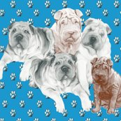 Rrrsharpei_best_design_shop_thumb