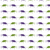 Insect weevil beetles green and purple