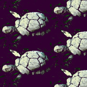 Turtle_1-ch