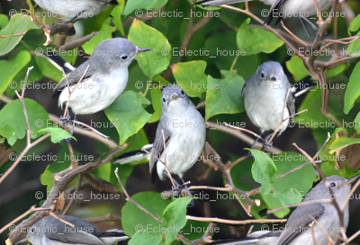 Bluegray Gnatcatcher Bird
