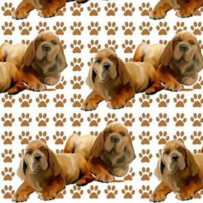 fila brasileiro_puppies