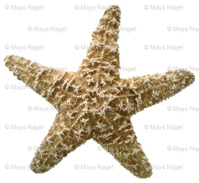 Starfish Natural