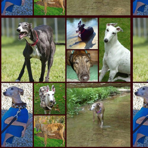 greyhound_collage