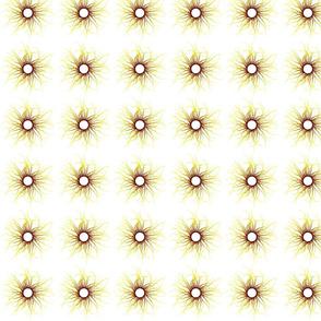 ciliasun6