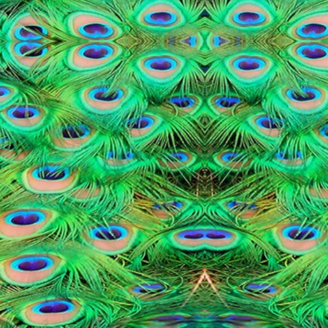 vibrant green peacock feathers fabric by krs_expressions on Spoonflower - custom fabric