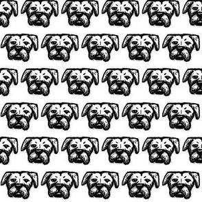 Pit Bull Dog Bully Boxer Cute