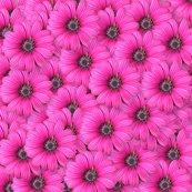 Rrrrrrpinkflowers_shop_thumb