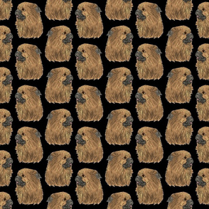 Tibetan Spaniel faces - black