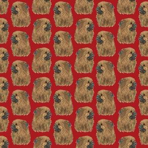 Tibetan Spaniel faces - red
